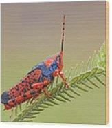 Leichhardts Grasshopper On Pityrodia Wood Print