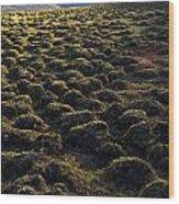 Lemmings Wood Print by Aaron Bedell