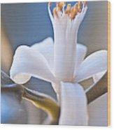Lemon Blossom Wood Print