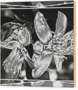 Lemon Blossoms Wood Print