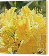 Lemon Drop Azalea Wood Print