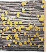 Lemon Drops Wood Print