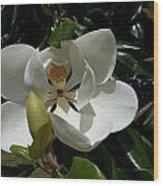 Lemon Magnolia Wood Print