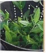 Lemon Verbena Herbs Wood Print