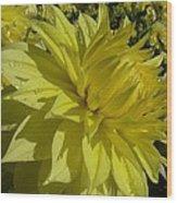 Lemon Yellow Dahlia  Wood Print
