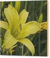 Lemon Yellow Daylily Blossom Wood Print