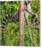 Lemur In The Green Wood Print