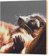 Lemur Lounging Wood Print