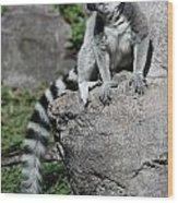 Lemur Pose Wood Print