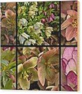 Lenten Rose Collage Wood Print
