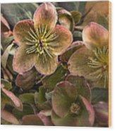 Lenten Roses Wood Print