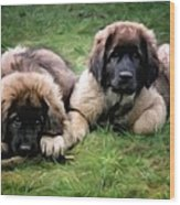 Leonberger Puppies Wood Print