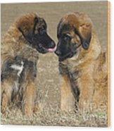 Leonberger Puppies Wood Print