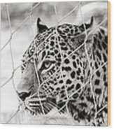 Leopard Black And White Photography Wood Print