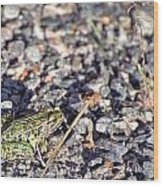 Leopard Frog And Gravel Wood Print