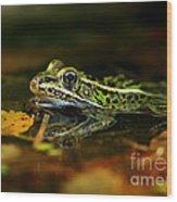 Leopard Frog Floating On Autumn Leaves Wood Print