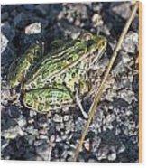Leopard Frog In Gravel II Wood Print