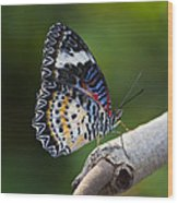 Leopard Lacewing Butterfly Wood Print