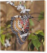 Leopard Lacewing Butterfly Dthu619 Wood Print