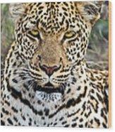 Wild Leopard In Botswana Wood Print