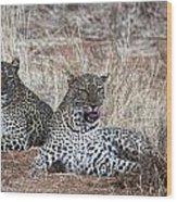 Leopard Mates Wood Print