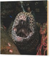 Leopard Moray Wood Print