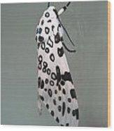 Leopard Moth Wood Print