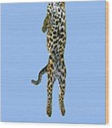 Leopard Panthera Pardus Wood Print
