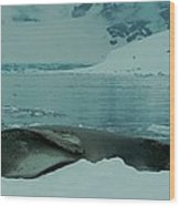 Leopard Seal Hauled Out Wood Print