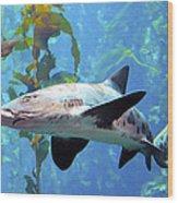 Leopard Shark Wood Print