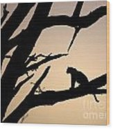 Leopard Sitting In A Tree Wood Print