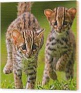 Leopard Stampede Wood Print by Ashley Vincent