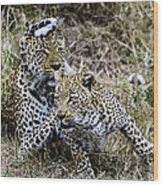 Leopard Tease Wood Print
