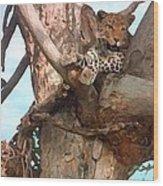 Leopard Up A Tree Wood Print