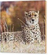 Leopard Watching Wood Print