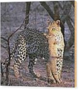 Leopard With African Wild Cat Kill Wood Print