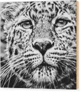 Leo's Portrait Wood Print