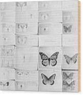 Lepidopterology Wood Print