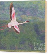 Lesser Flamingo Phoenicopterus Minor Flying Wood Print