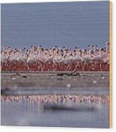Lesser Flamingos In Mass Courtship Lake Wood Print
