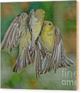 Lesser Goldfinch Females Fighting Wood Print
