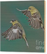 Lesser Goldfinch Pair In The Air Wood Print