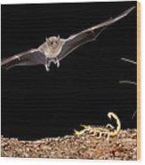 Lesser Long-nosed Bat Approaching Wood Print
