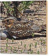 Lesser Nighthawk Chordeiles Acutipennis Wood Print