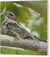 Lesser Nighthawk On Branch Wood Print