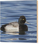 Lesser Scaup Wood Print
