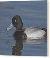 Lesser Scaup Male Wood Print