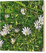 Lesser Stitchwort Near Lobster Cove In Gros Morne National Park-newfoundland   Wood Print
