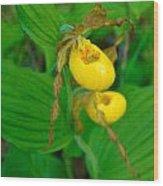 Lessor Yellow Ladys Slipper Orchid Of The Baileys Harbor Range Lights Wood Print