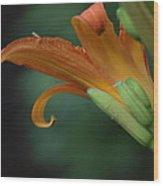 Let It Curl Wood Print by Corina Bishop